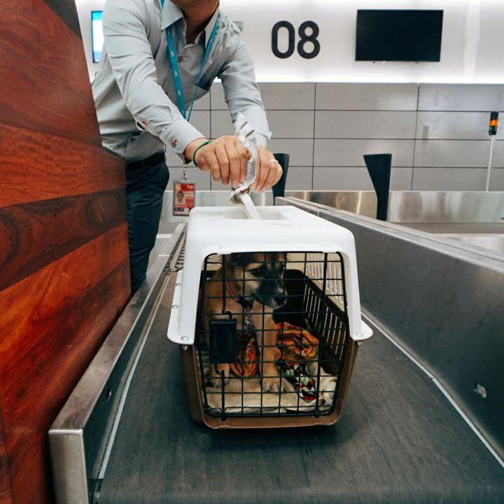 Volando Con Mascotas