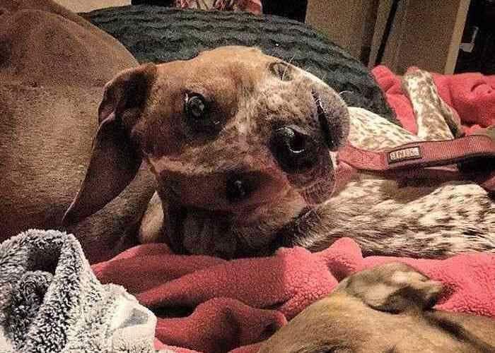 Weird Dog Face